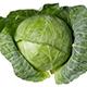 Cabbage - AudioJungle Item for Sale