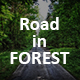 Road in Forest - VideoHive Item for Sale