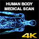 Human Body Medical Coronal Scan - VideoHive Item for Sale