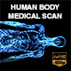 Human Body Coronal Medical Scan - VideoHive Item for Sale
