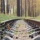 Railway Road In The Deep Pine Forest - VideoHive Item for Sale