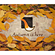The Autumn Stone Logo - VideoHive Item for Sale