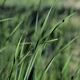 Green Grass Background - VideoHive Item for Sale