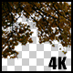 Real Maple Autumn Tree Branch with Alpha Channel - VideoHive Item for Sale