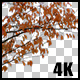 Real Cherry Autumn Tree Branch with Alpha Channel - VideoHive Item for Sale