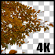 Real Beech Autumn Tree Close Up Branch with Alpha Channel - VideoHive Item for Sale