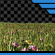 Grass & Flowers with Alpha - VideoHive Item for Sale