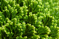 Green floral background - PhotoDune Item for Sale