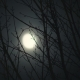 Full Moon at Night Trees - VideoHive Item for Sale