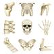 Human Bones Icons Vector Set - GraphicRiver Item for Sale