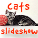 Cats Slideshow - VideoHive Item for Sale