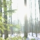 Winter Sun Shining Through Trees, Dolly - VideoHive Item for Sale