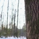 Sun Peeking Through the Trees Into a Snow Covered Woodland - VideoHive Item for Sale