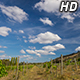 Clouds over Vineyard - VideoHive Item for Sale