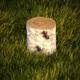 Birch stump - 3DOcean Item for Sale