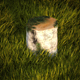 Birch stump with moss - 3DOcean Item for Sale