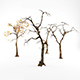 Trees Low-poly - 3DOcean Item for Sale