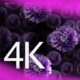 Asters 3 - VideoHive Item for Sale