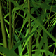 3D Growing Bamboo Trees Transition - VideoHive Item for Sale