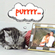 Little Cats Slideshow - VideoHive Item for Sale