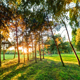 Nature Ambiences Pack 2