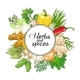 Vector Vegetable Round Design with Spices - GraphicRiver Item for Sale