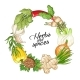 Vector Vegetable Circle Template with Spices - GraphicRiver Item for Sale