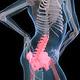 Back Pain medical model - 3DOcean Item for Sale