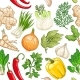 Vector Vegetable Pattern with Herbs on White - GraphicRiver Item for Sale