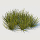 Euphorbia Larica - 3DOcean Item for Sale