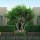 10 Fruitless Olive - 3DOcean Item for Sale