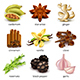 Species and Herbs Icons Vector Set - GraphicRiver Item for Sale