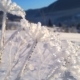 Winter Forest Sun Plant Snow Ice - VideoHive Item for Sale