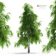 Birch Tree - 3DOcean Item for Sale