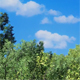 Forest With Blue Sky - VideoHive Item for Sale