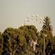 Ferris Wheel - VideoHive Item for Sale
