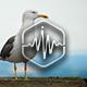 Seagull Calls Loop