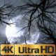 Moon And Scary Trees - VideoHive Item for Sale