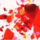 Colors Petals Logo - VideoHive Item for Sale