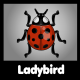 Ladybird Beetle - GraphicRiver Item for Sale