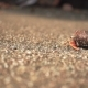 Hermit Crab Walking Away at the Beach in - VideoHive Item for Sale