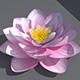 Lotus Flower - 3DOcean Item for Sale