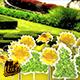 Summer Flipbook - VideoHive Item for Sale
