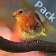 Birds Sound Pack