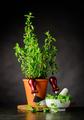 Green Oregano with Herb Chopper - PhotoDune Item for Sale