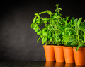 Green Herbs Growing With Copy Space Area - PhotoDune Item for Sale