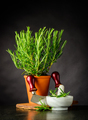 Rosemary Herb with Mezzaluna and Pestle and Mortar - PhotoDune Item for Sale