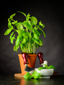 Basil Herb with Herb Chopper - PhotoDune Item for Sale