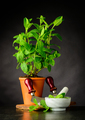 Mint Plant with Pestle and Mortar Growing in Pot - PhotoDune Item for Sale