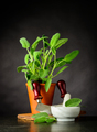 Still Life with Sage Plant and Utensils - PhotoDune Item for Sale